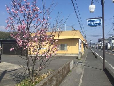 早川法律事務所